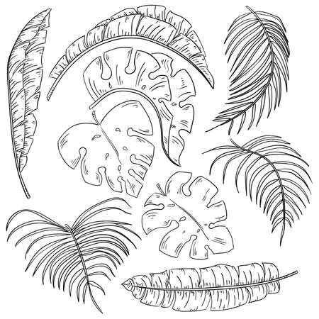 Tropical plants leaf set, isolated on white background. Vector sketch illustration. Hand drawn tropic nature and floral design elements.