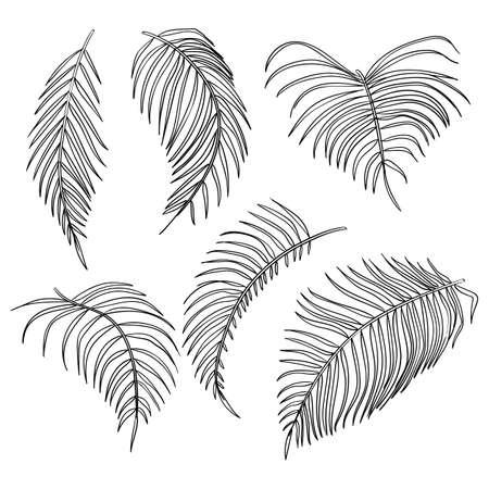 palm leaves, jungle leaf set isolated on white background.