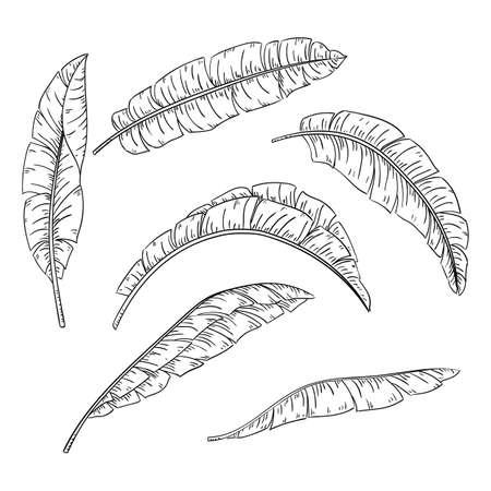 Tropical palm leaves set, jungle banana leaf