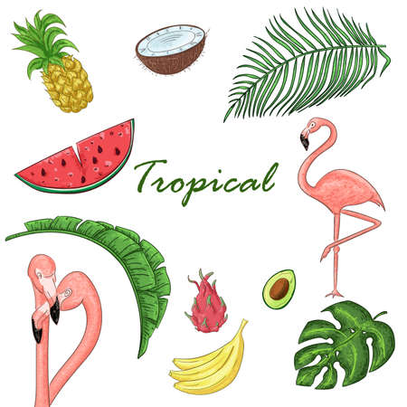 Tropical collection for summer exotic leaves, flamingos and fruits Ilustracja