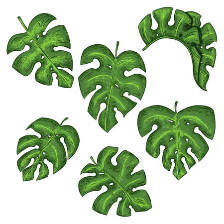 Tropical leaves collection isolated elements on the white background. Zdjęcie Seryjne - 129962745