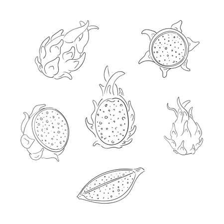 Dragon fruits whole and sliced outline illustrations set Illustration