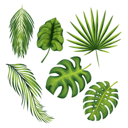 Exotic jungle plant leaves illustrations set isolated in white background Ilustracja