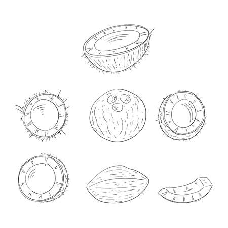 Coconut whole and cut in halves hand drawn outline illustrations set Illustration