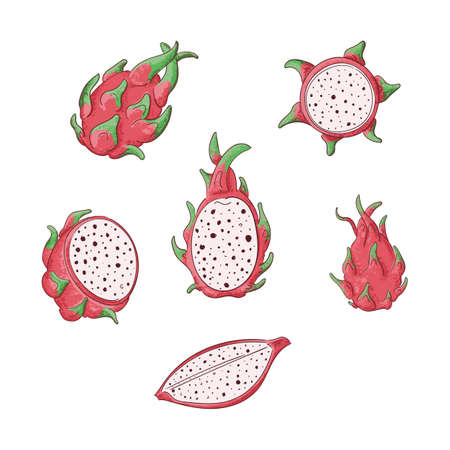 Dragon fruits whole and sliced color illustrations set. Exotic asian juicy dessert, fruit salad ingredient cat in halves. Dragonfuits, pitaya, pitahaya hand drawn sketches for coloring book