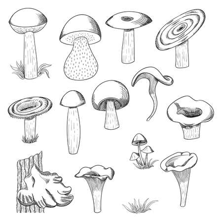 Mushroom hand drawn sketch vector illustration. Mushroom shiitake, truffle, chanterelle, champignon, enokitake, honey agaric, oyster mushroom, fresh organic food isolated on white.