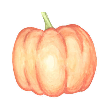 Watercolor pumpkin vector isolated hand drawn object. Vegetable engraved style illustration. Detailed vegetarian food sketch. Farm market product.