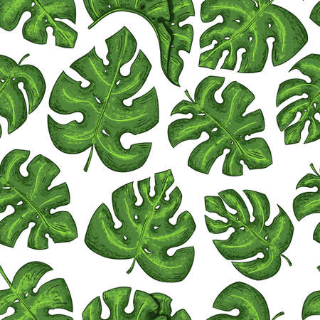 Tropical leaves seamless pattern exotic elements on the white background.