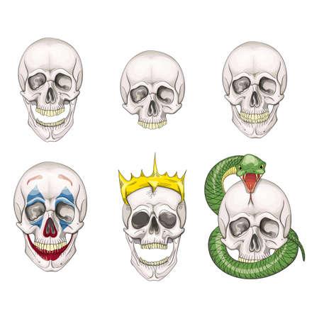 The human skull set isolated on white background. Vector illustration. Illustration