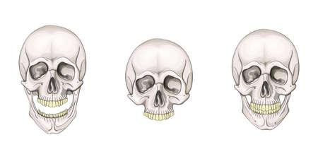 The human skull set isolated on white background. Vector illustration. Ilustracja