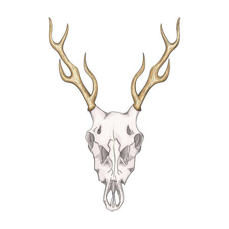 Drawn deer skull with horns in retro style.