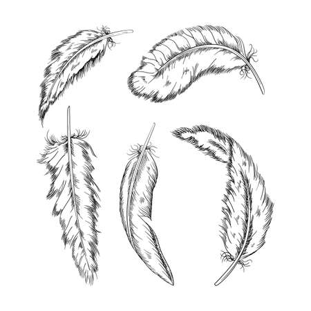 Collection of the monochrome feathers .Handmade work.Vector illustration isolated on white background