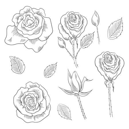 Hand drawn set of roses, rose buds and leaves Ilustracja