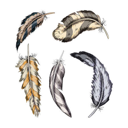 Collection of the feathers .Handmade work.Vector illustration