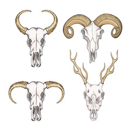 Collection of skulls of wild animals western mystical. Deer bohemian head, western vintage animal. Ilustracja