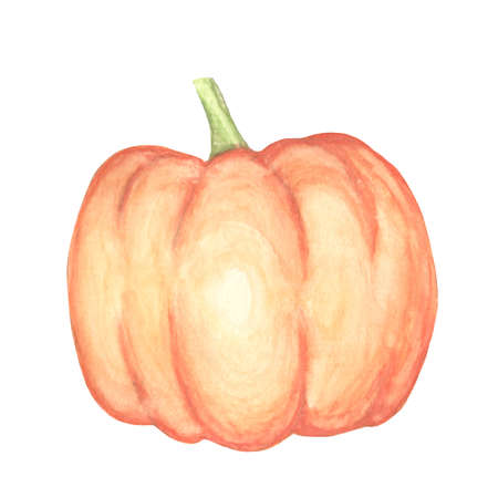 Watercolor pumpkin isolated hand drawn object. Vegetable engraved style illustration.