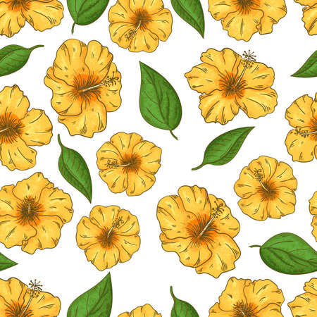 Hibiscus flowers seamless pattern with leaves on white background. Banque d'images