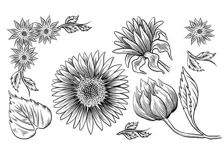 Sunflower seed and flower drawing set. Hand drawn isolated illustration. Food ingredient vintage sketch.