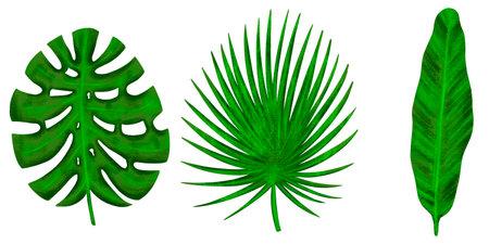 Four tropical leaves. Hand drawn leaves illustration 版權商用圖片 - 162127136