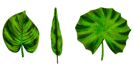 Four tropical leaves. Hand drawn leaves illustration
