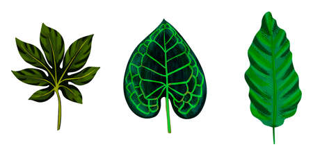 Four tropical leaves. Hand drawn leaves illustration 版權商用圖片 - 162127140