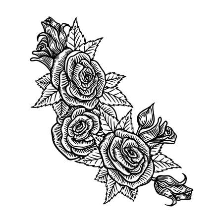 Roses flowers, vector sketch illustration. Hand drawn floral nature design elements. Rose blossom, leaves and buds isolated on white background.