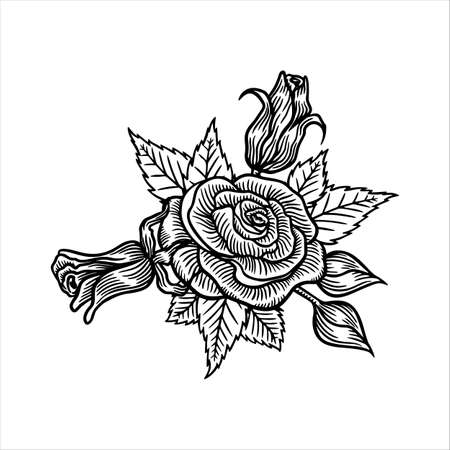 Roses flowers, vector sketch illustration. Hand drawn floral nature design elements. Rose blossom, leaves and buds isolated on white background. 版權商用圖片 - 164105802