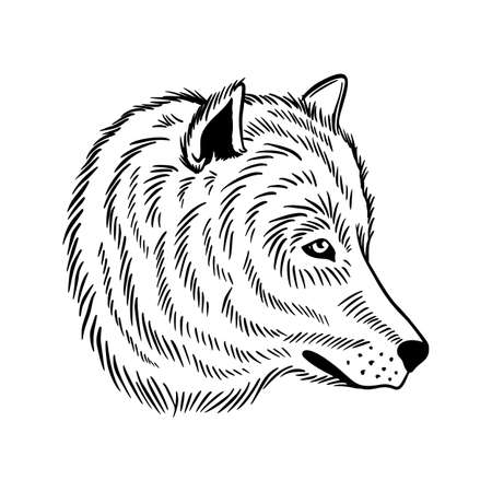 A wolf or dog. Vector illustration for postcard or poster, print for clothes.