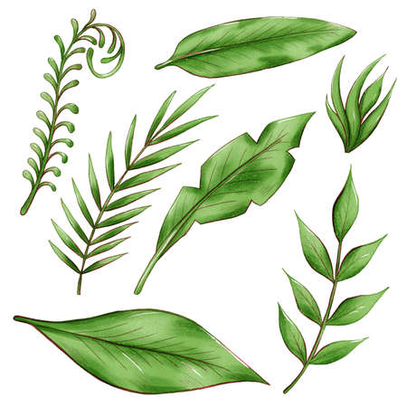 exotic tropical leaves, jungle foliage set isolated on white background. 版權商用圖片