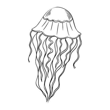 Jellyfish outline hand-drawn doodle marine sketch, underwater jelly fish illustration, medusa line art drawing animal , tattoo sketch .