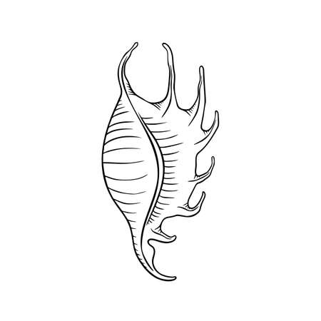 Seashell thin line icon, animal and underwater, shell sign vector graphics, a linear pattern on a white background, eps 10.