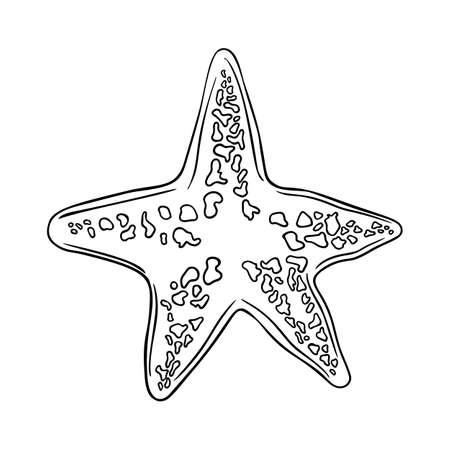 Hand drawn marine Starfish nature ocean aquatic underwater vector. Engraving illustration on white background. Sketch starfish