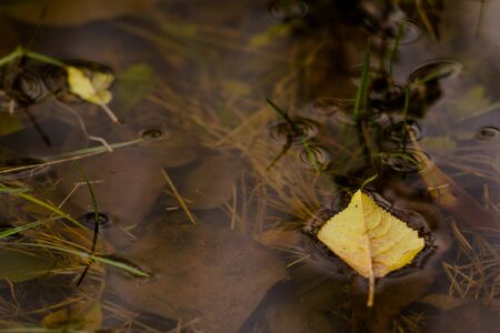 Autumn yellow leaf on the water of a pond Stock Photo - 89440021