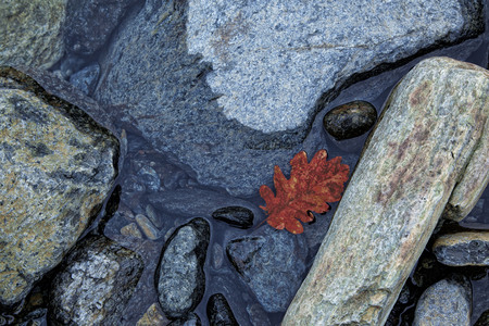 river rocks with water and red leaf, in a winter day, blue light Banque d'images