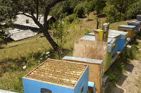 meadowland: beekeepers instruments  at work in Italian farm Stock Photo
