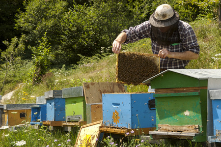 beekeeper at work in Italian farm