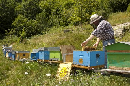 meadowland: beekeeper at work in Italian farm