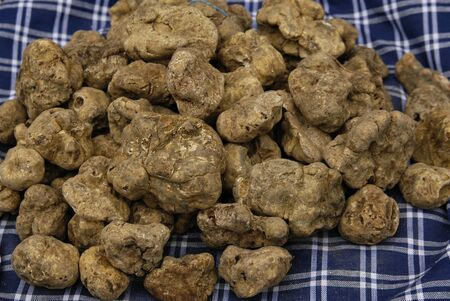 typical italian food: white and black truffles