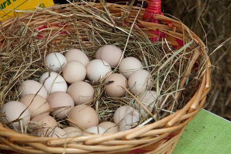 gallina con huevos: pollo org�nico, huevos de gallina en la cesta de paja