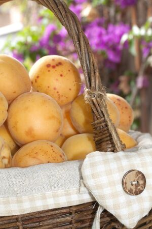 typical apricots of Ligurian riviera called valleggia, in a wicker basket