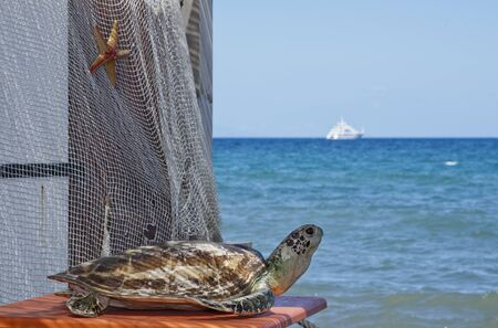 the turtle and the boat, corsica, france Stock Photo