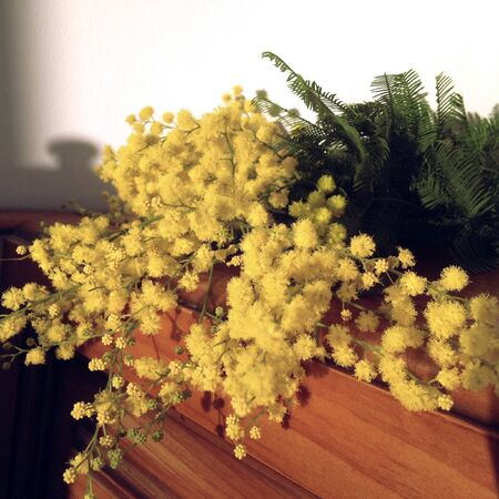 yellow fresh mimosa on a wooden table
