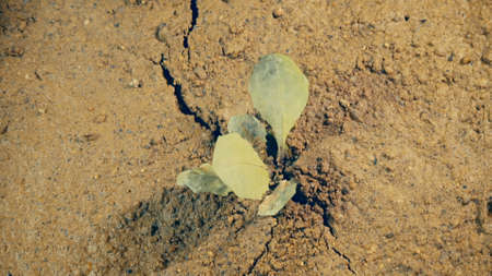crack growing in shaking ground land destruction Earthquake disaster concept life threat close up background