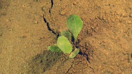 Earthquake rips ground apart, shaking the Earth with crack in land with growing plant, disaster concept