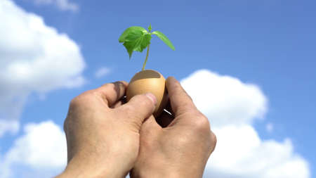 hand holding green plant sprout growing in egg, against blue sky background, new life, germinatio, springtime, beginning concept