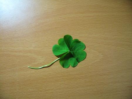 Lucky Clover Leave Stok Fotoğraf