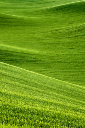 wheat fields: picturesque rolling hills of green wheat fields of wheat Stock Photo