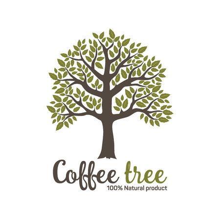 Hand drawn graphic coffee tree with green leaves.