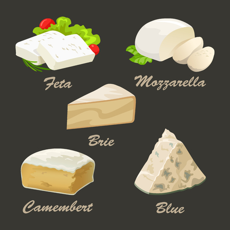 Set of different kinds of white cheese. Realistic vector illustration with blue, brie, camembert, feta, and mozzarella. Curd collection used for logo design, advertising cheese or restaurant menu. Illustration