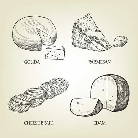 edam: Sketch of different kinds of realistic cheese. Graphic vector collection include gouda, parmesan, braid and edam icon. Curd set used for advertising dairy product, restaurant menu or logo design